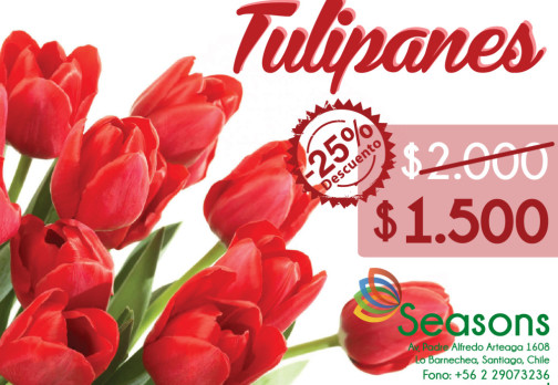 Seasons – Facebook Oferta Tulipanes